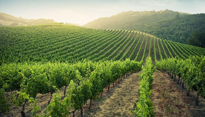 L'innovation, de la vigne au verre