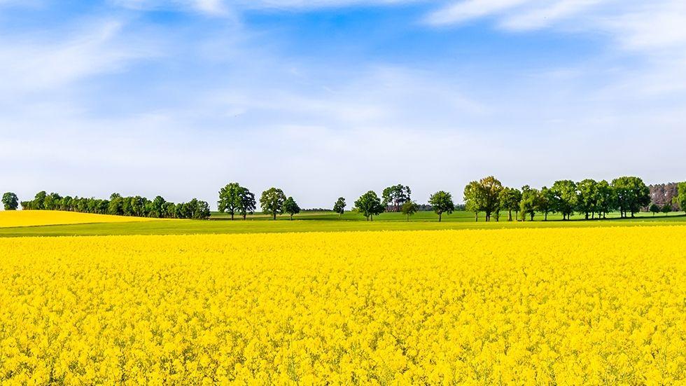 PRISME – L'analyse de la conjoncture et de l'actualité agricole et agroalimentaire du Crédit Agricole