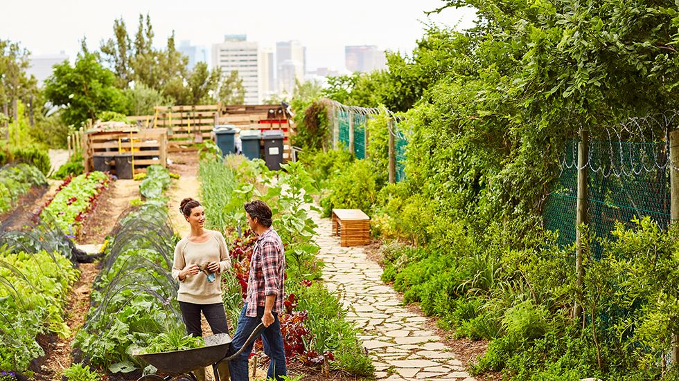 L'agriculture urbaine : mirage ou réalité ?