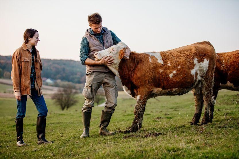 L'innovation au service de l'élevage